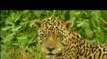 Conflits dans la nature - Conflits dans la jungle
