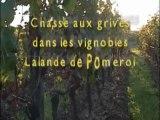 teaser1246013_04-12-7c-chasse-aux-grives-dans-les-vignobles-lalande-de-pomerol_.mp4