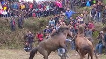 Age-Old Brutality in Chinese Traditional Horse Fighting