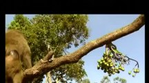 Conflits dans la nature - Conflits autour d'un arbre