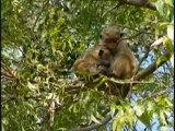 Familles de macaques