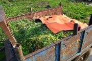 Adana'da Üzerlerine Yıldırım Düşen 2 Tarım İşçisi Öldü (2)
