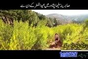 Arbaz Khan Pashto HD Film Hits Songs ilzaam  Hits Album Part-7