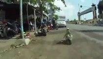 Un singe en Poket Bike