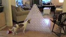 Best Dog Gift Ever - Dog Receives 210 Bottles for Christmas  Cute Dog Maymo