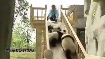 LOL funny cute pandas video compilation 2015