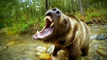 Discovery BBC documentary animals 2015 Wild Amazon Discovery Animals Nature documentary HD