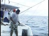 Profession voyageur - Maurice, l'île poisson