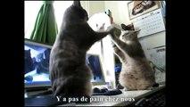 Dansons la capucine avec les chats