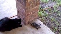 Cat Chasing Turtle Chasing Cat