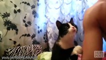Cute cats asking for hugs... Adorable pet compilation