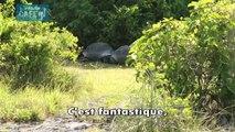 un explorateur coupe deux tortues en plein action !