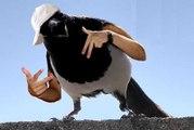 Gangster Bird Rap (Parental Advisory: Profane Bird Content)
