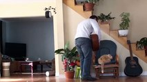 Il vire son chat et ce dernier lui fait payer le prix.