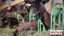 Finaliste Agriculteur Talents Gourmands Crédit Agricole Sud Rhône Alpes 2014