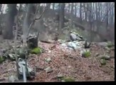 bear hunting with dogs - Hunting TV