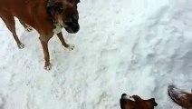 Un vieux chien joue un tour à un jeune chien