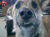 Sevimli köpeğe harika dublaj