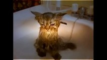 Funny Crazy Cats Playing in Water & Taking Baths Funny Kitty Cats, Funny Pets, Funniest Animals [FUL