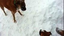 Un jeune chien veut courir en cercle avec un vieux chien dans un sentier creuser dans la neige.