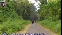 Attention lors des balades à moto, un éléphant peut vous charger !