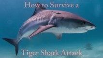 Snorkeler Survives Shark Killing Attack - Animal Fighting -