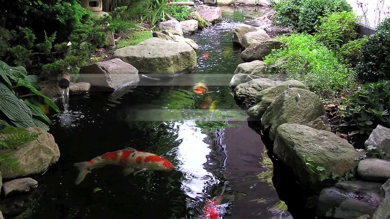 making a koi pond, koi pond construction