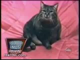 Possesed Cat (you will laugh)