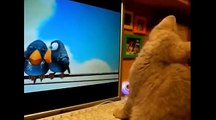 Funny Cats, Dogs, Monkey And Tiger  - Funny animals Videos - Funny Videos Compilation 2015 #000003