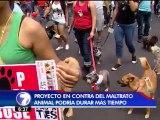 Diputados podrían irse sin aprobar proyecto de ley contra maltrato animal