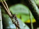 Ameise trägt Alien - Ant bears Alien