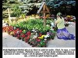 Minuni la mormântul Parintelui Arsenie Boca