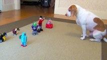 Dog vs. Robot Army: Cute Dog Maymo