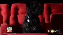 Hopes : Pas de doute pour Frisbee, Saint-Hubert a du chien, ouaf, ouaf !