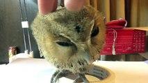 Petting my pet owl