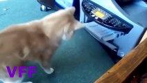 Cat Fail Compilation Videos   Epic Funny Cats Jump Fail 2015   Funny Cat Fails No.145
