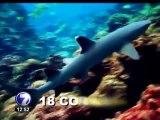 Pescadores ilegales acumulan advertencias pero no se alejan de la Isla del Coco