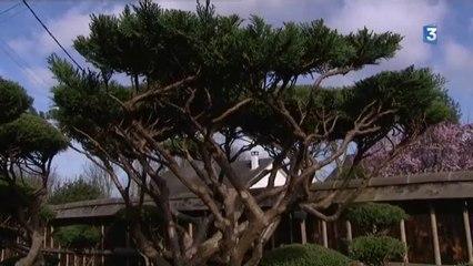 Gilles Touret, créateur de jardins japonais