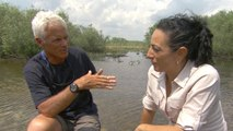 """Jeremy Wade on the swimming success of """"River Monsters"""""""