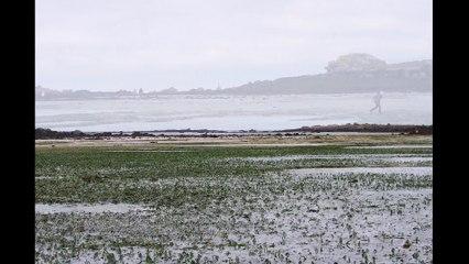 Landéda, l'Aber-Wrac'h, grande marée 2015