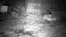 7 - Le printemps, les hérissons circulent dans le jardin ...