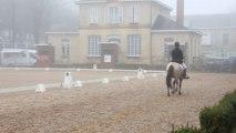 Dressage AS PONEY 1 - CCE POMPADOUR - Solène Régnier & Teck de Civry