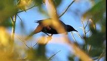 NEW ZEALAND Nature Sounds & Bird Song - AOTEAROA Nature Sounds of New Zealand by Symbiosis