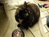 Cat Is Possesed, Glad He's Not Mine