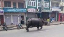 Un rhinocéros terrorise le Népal - ZAPPING ACTU HEBDO DU 04/04/2015