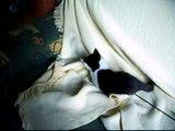 Katzenbabys: Rambo und Ronja beim Toben