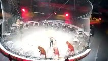 Tiger stunt in  Circus amazing