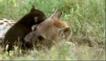 Naabi - A Hyena Princess 1/4