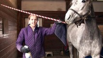 Horses Care & Grooming : Horse Grooming Show Tips