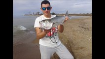 Beach spinning bluefish and seabass (spinning σε παραλια,γοφαρια λαβρακι) vol.2